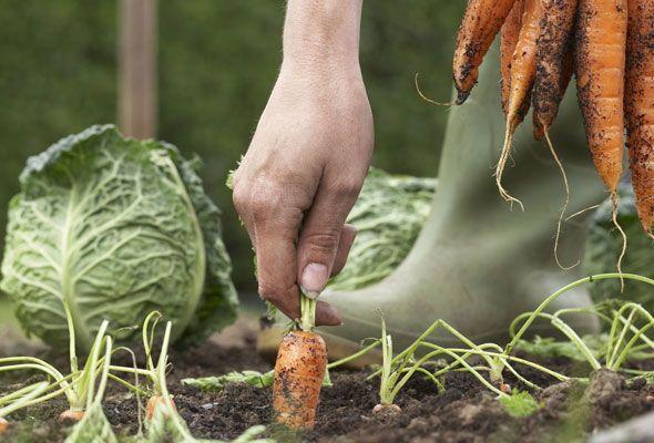 ~Organic Vegetable Gardening For Beginners - 7 Tips You Heard & Forgot~