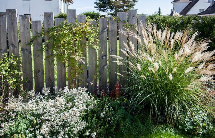 Sichtschutz, grau, Blumen, Pflanzen, Steinsichtschutz