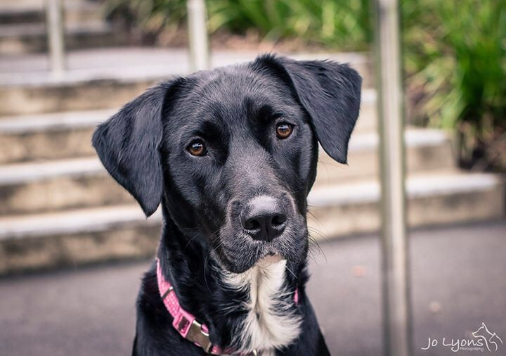 Roxy <3 This girl was surrendered to Sydney Animal Second-chance Inc. because the landlord wouldn't let her family keep her. This is a huge problem in Australia... and one which needs to be addressed if we are to be a progressive and compassionate society