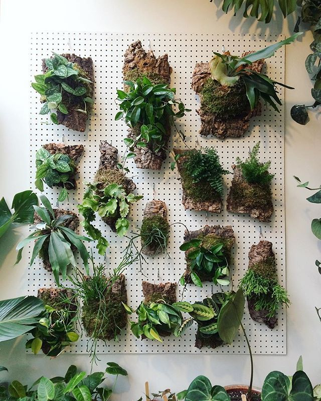 Mounted plants looking tippy top today. These guys are part of our holiday plant sale - 20% off on the web shop, and today only for Small Business Saturday, we're throwing in a free air plant gift for all orders with coupon code: instagram