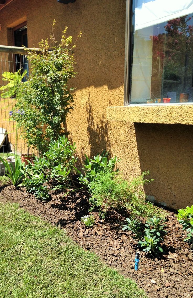 Se corrige macizo existente en el ante jardin, se agrega acer japonico, agapanthos, tobiras