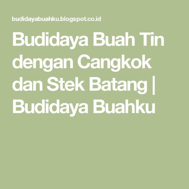 Budidaya Buah Tin dengan Cangkok dan Stek Batang   Budidaya Buahku