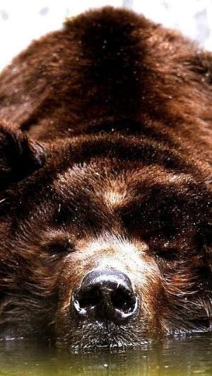 brown bear by dina