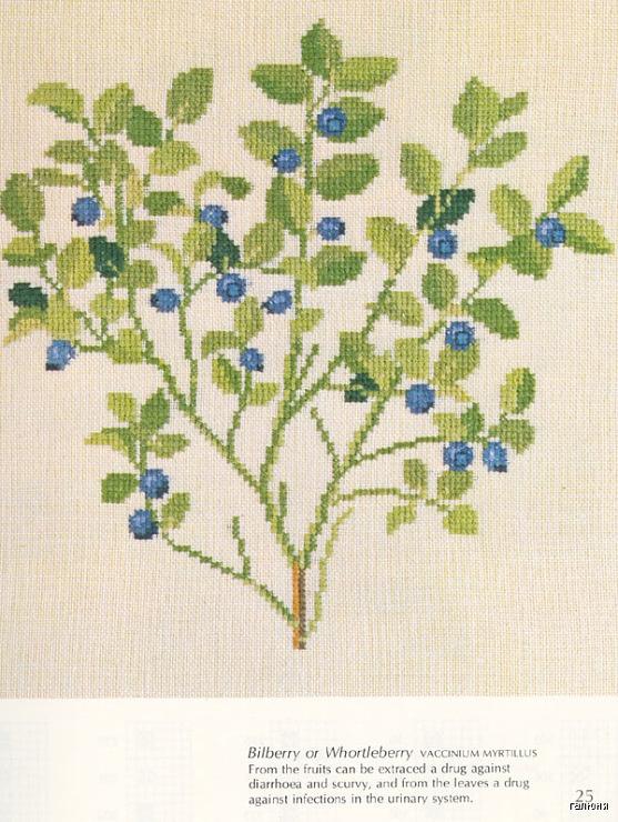 Gallery.ru / Фото #16 - Medicinal Plants - Mosca