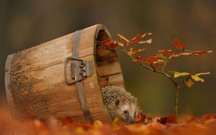 Herfst met een egeltje