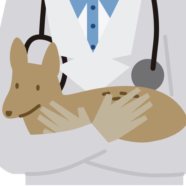 MI MASCOTA TIENE FOBIA A LOS FUEGOS ARTIFICIALES Es posible que muchas de sus mascotas sufran de fobia a los ruidos intensos, como los de la pirotecnia, por ejemplo. Esto, porque nuestros perros y …