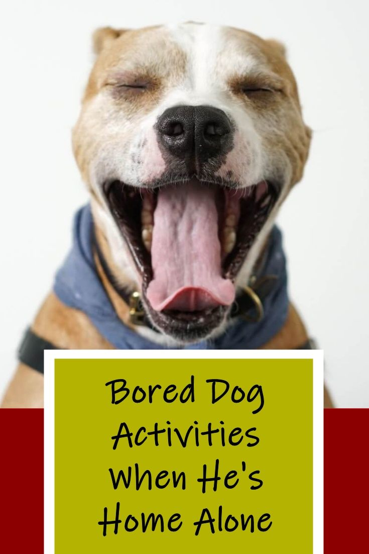 Our Dogs Get Easily Bored So We Have To Find Ways To Keep Them Busy Indoors Check Out Our Top Picks For The Best Toys An Bored Dog Dog Boredom Dog