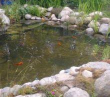 fiskene i dammen