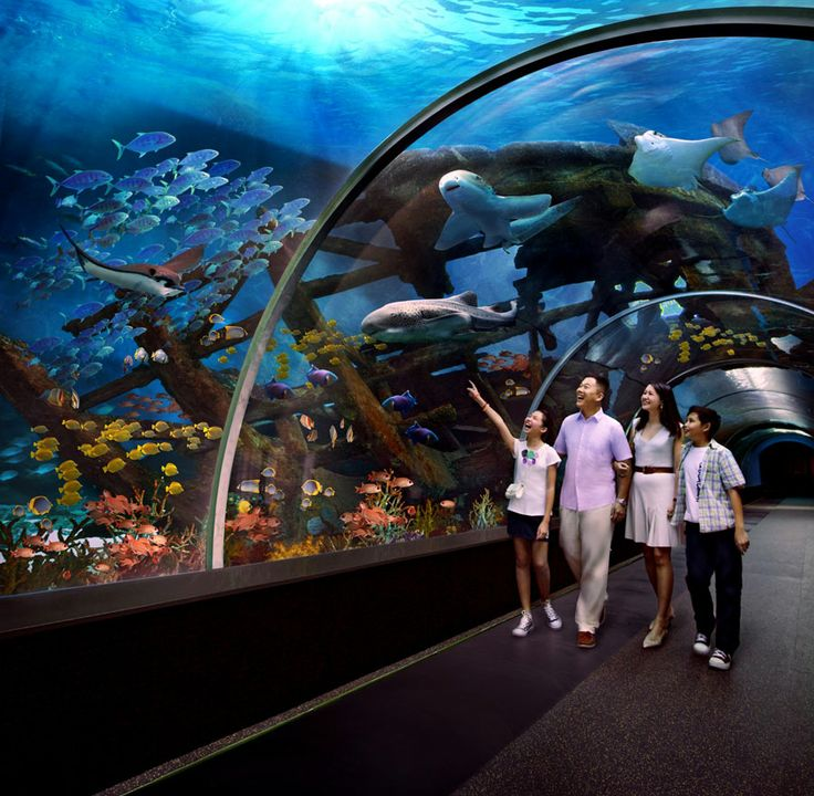 Enjoy a date with some of the most amazing citizens of the undersea world at the #UnderwaterWorld #Singapore and #DolphinLagoon.  http://www.hitours.in/tour-listing.aspx/singapore