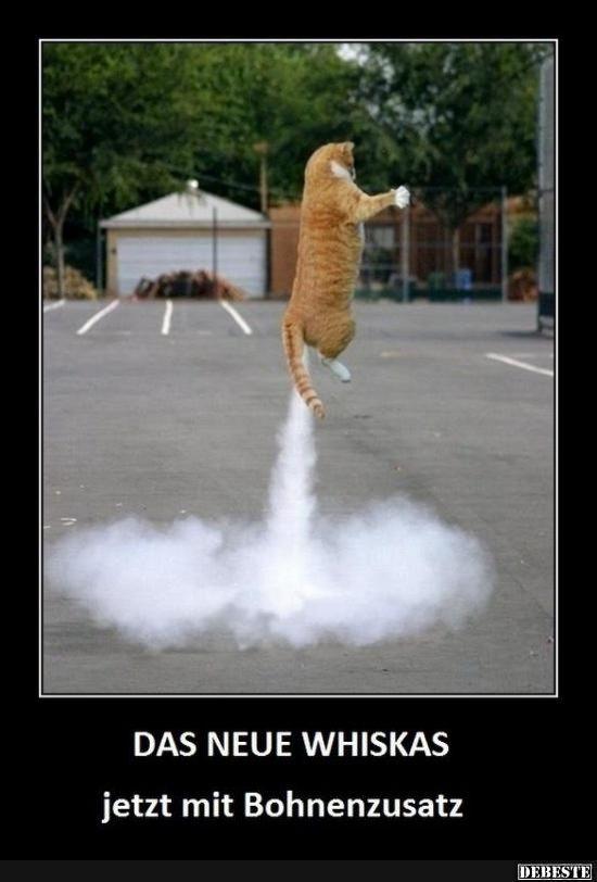 Das neue Whiskas.. | Lustige Bilder, Sprüche, Witze, echt lustig – MischDichNichtEin ..