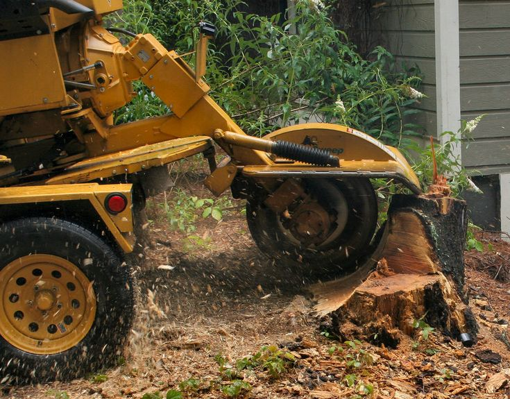 Is a stump giving you an issue? We can grind it down for you! Call us today! #Raleigh #TreeServices https://triangletree-service.com?utm_source=&utm_medium=&utm_campaign=&utm_content=