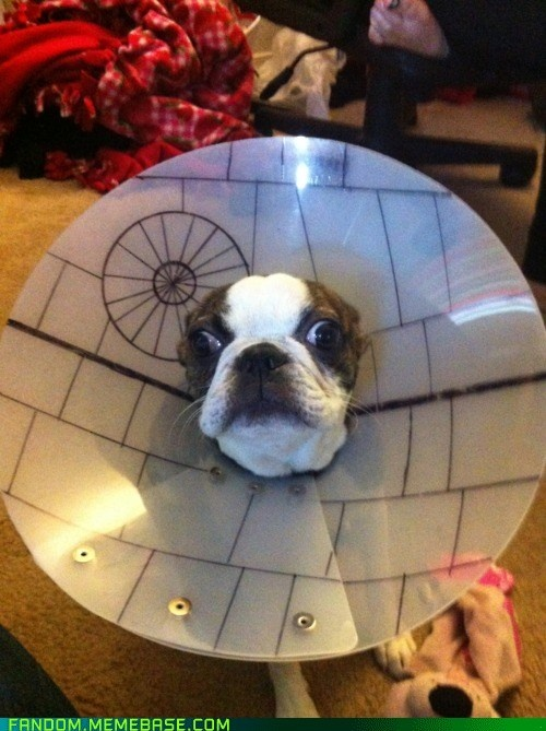 Sooo doing this to Ezio once he gets fixed!: Death Star, Deathstar, Star Dog, Dogs, Stars, Star Wars, Funny, Animal, Starwars