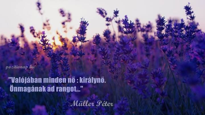 Müller Péter bölcsessége a nőkről. A kép forrása: Pozitív Nap