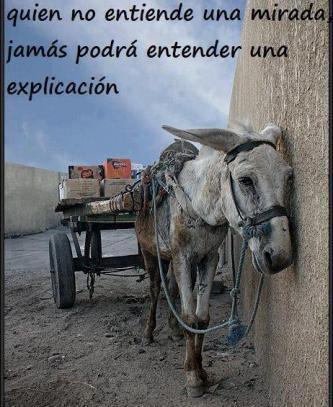 hasta que no entendamos que los animales no son cosas, y que debemos tratarlos como seres vivos con derechos, no habremos dado un paso como una sociedad civilizada.
