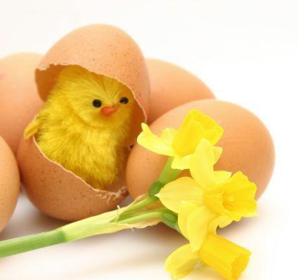 pulcino con uovo - Cerca con Google