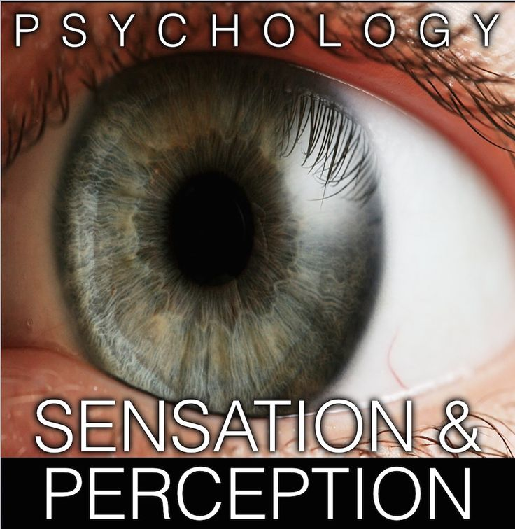 ap psych notes sensation and perception of Ap psychology do-now (in journal) what is an illusion how can illusions  influence and mislead our perception of a stimulus provide an example of a.