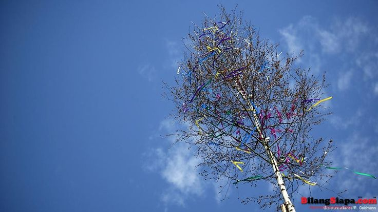 Katakan Ich liebe Dich dengan Pohon Birch