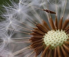 TEACHER RESOURCES - Seeds, Stems and Spores  - A plant reproduction resource for NZ Curriculum levels 1 and 2. Explore some of the science ideas behind plant life cycles, seed dispersal and how some plants reproduce without seeds.