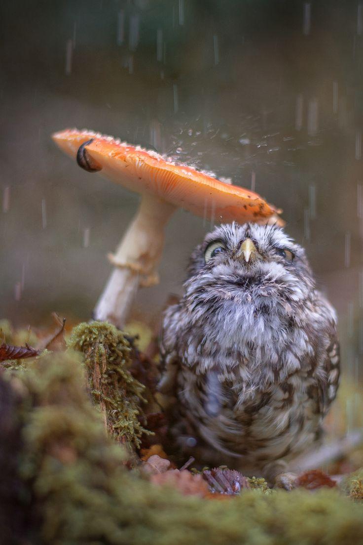 A Wandering Vegan — heaven-ly-mind:  Raindrops    I will reblog this...
