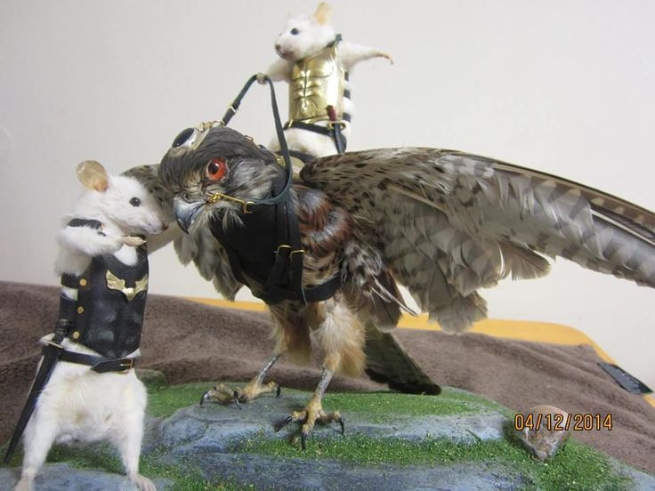 Anthropomorphic taxidermy mice and hawk (falco tinnuculus) THE HAWK WHISPERER