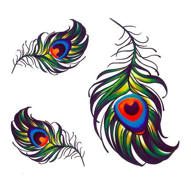 Small Peacock Feather Tattoo Design Peacock Feather Tattoo Feather Tattoo Design Peacock Art