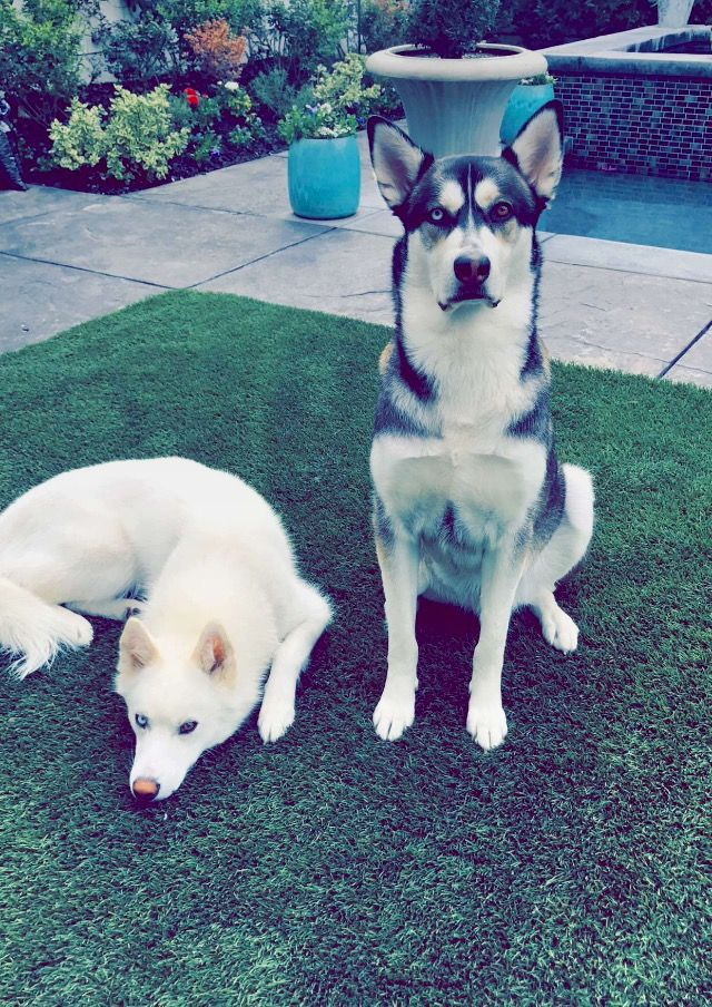 Joey Graceffa's dogs