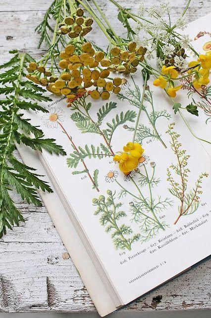 """A fák, virágok, gyógynövények mesés szépsége engem korán rabul ejtett. Szüleim úgy hitték, hogy a tinédzserkor után """"elnövöm"""" a hóbortomat, ám nemhogy nem nőttem el, hanem még inkább magával ragadott a gyógynövények világa."""