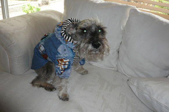 7kgくらいのワンコ用コート。(犬は販売対象ではありません)背部はラメ入りデニム地(裏地なし)、腹部とフード内側にはボーダー柄の伸びるコットン素材、フード外側...|ハンドメイド、手作り、手仕事品の通販・販売・購入ならCreema。