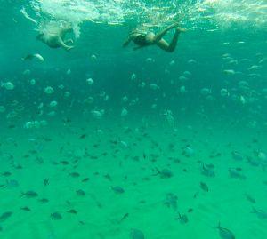 Snorkeling, Narooma, NSW. Photo: MysteryStan