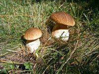 Jakie wartości odżywcze posiadają grzyby?
