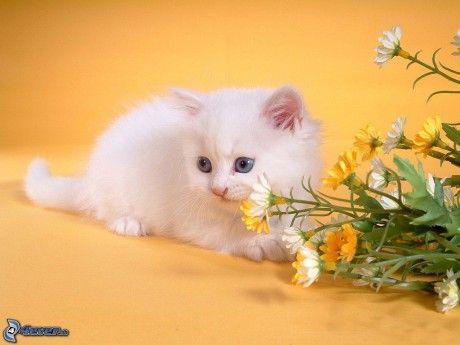Výsledok vyhľadávania obrázkov pre dopyt mačiek
