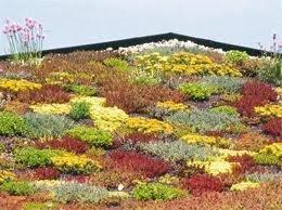 groene daken - Google zoeken