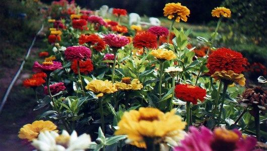 Follow these 5 easy steps to grow enough flowers to fill your house with blooms.