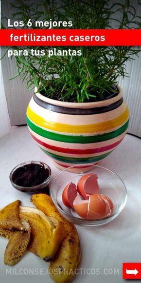 Los 6 mejores fertilizantes caseros para tus plantas