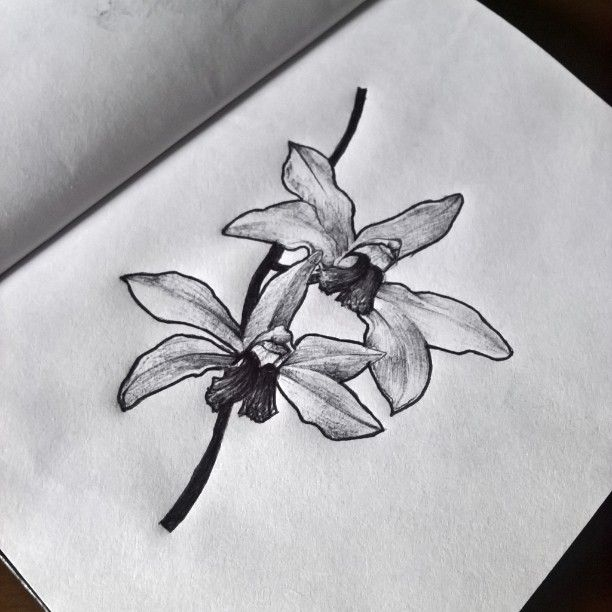 #drawing #nature #orchid #flower #pen #sketch