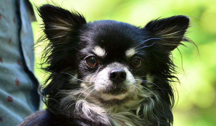 犬のことわざ故事成語昔から嫌われ者だった犬のウンチが登場することわざ