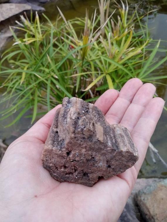 Crystallized Petrified Wood With Drusy Smoky Quartz Points Bois