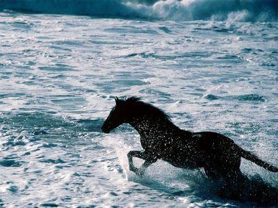 Galeria com 35 belas e diferentes raças de cavalos
