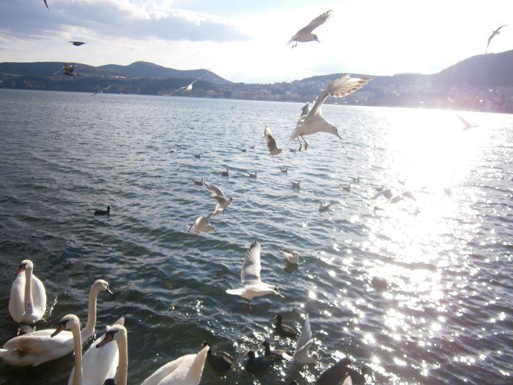 Kastoria <3