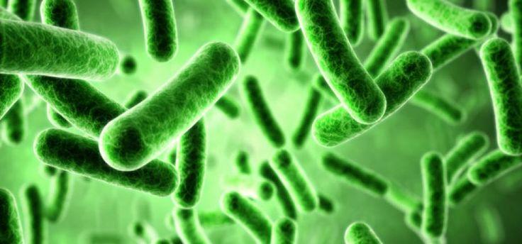 Υπάρχουν ωφέλιμοι μικροοργανισμοί;