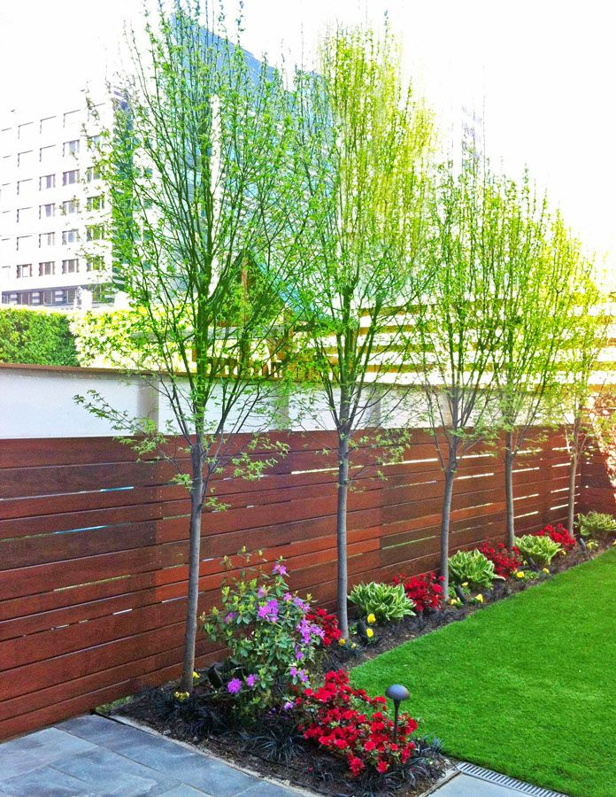 This contemporary brooklyn backyard features an ipe fence for Tree landscaping ideas