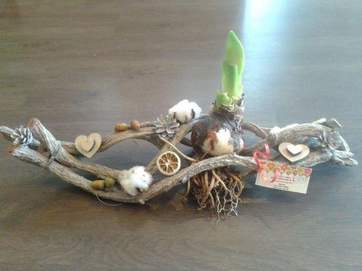 amaryllis op Stok
