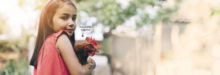 Magalli : la poule pondeuse, ornementale et son alimentation