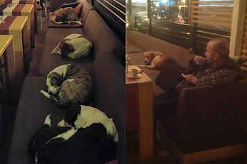 This Coffee Shop Opens Its Doors To Stray Dogs Every Night
