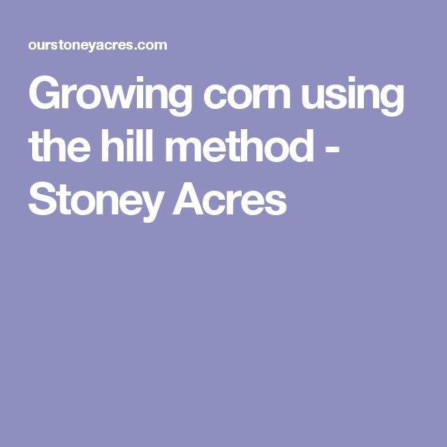 Growing corn using the hill method - Stoney Acres
