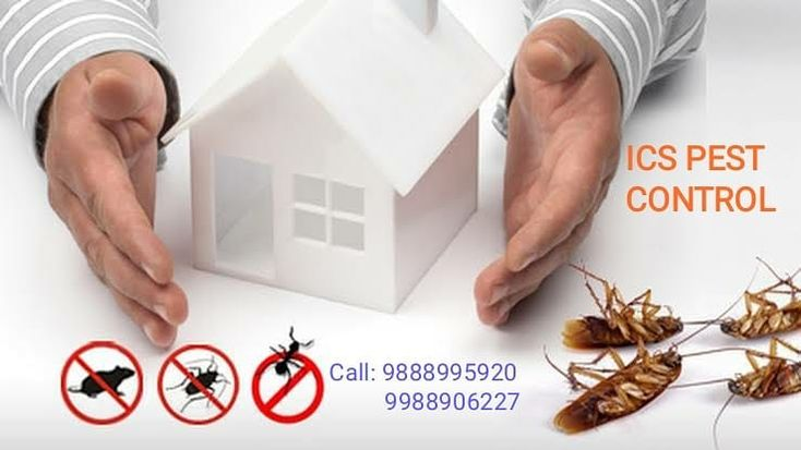 Anti Termite Control Service In Tdi City Ics Pest Control Termite Control Insect Control Pest Control Services