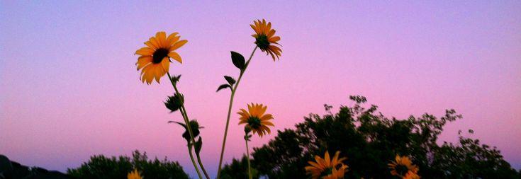 Há flores em tudo que vejo. pinterest // @stellount