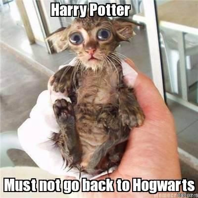 There are no wordsHarry Potter Jokes, Cat, Real Life, Harry Potter Funny, Harrypotter, Kittens, Harry Potter Humor, So Funny, Animal