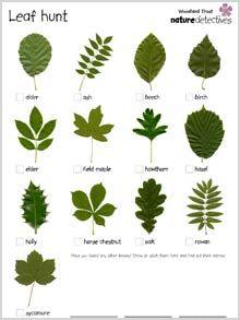 Woodland Trust printables: Trees