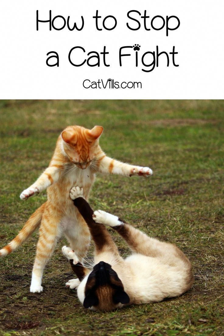 Your Best Obedience Cat Training Solutions In 2020 Cats Cat Training Cat Behavior